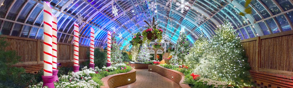 Winter Flower Show at Phipps Conservatory